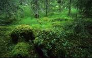 noordelijk bos
